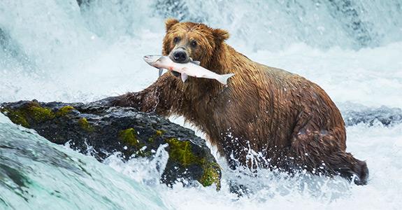 Court Services Alaska